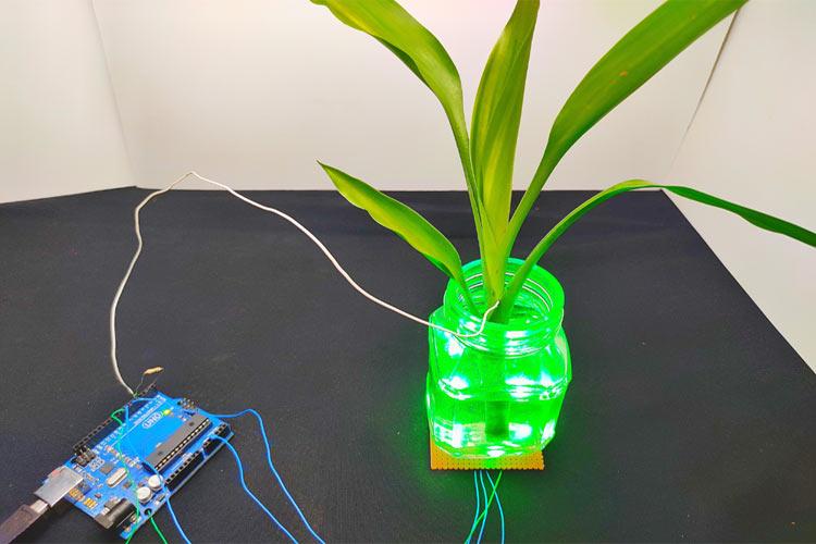 Внешний вид изменяющего цвет при прикосновении растения с использованием Arduino