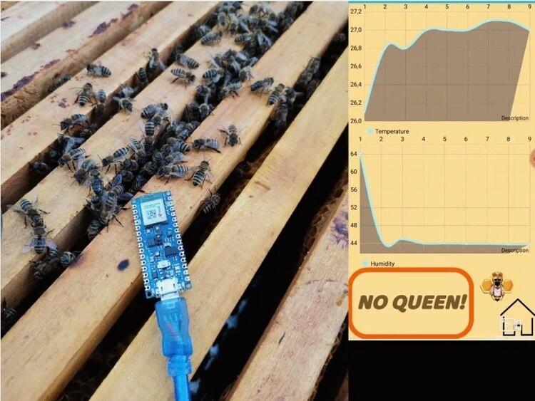 Внешний вид проекта контролера пчел на Arduino Nano 33 BLE Sense